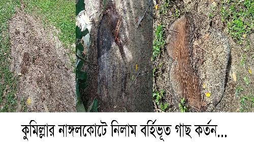 নাঙ্গলকোটে সরকারী গাছ কর্তন